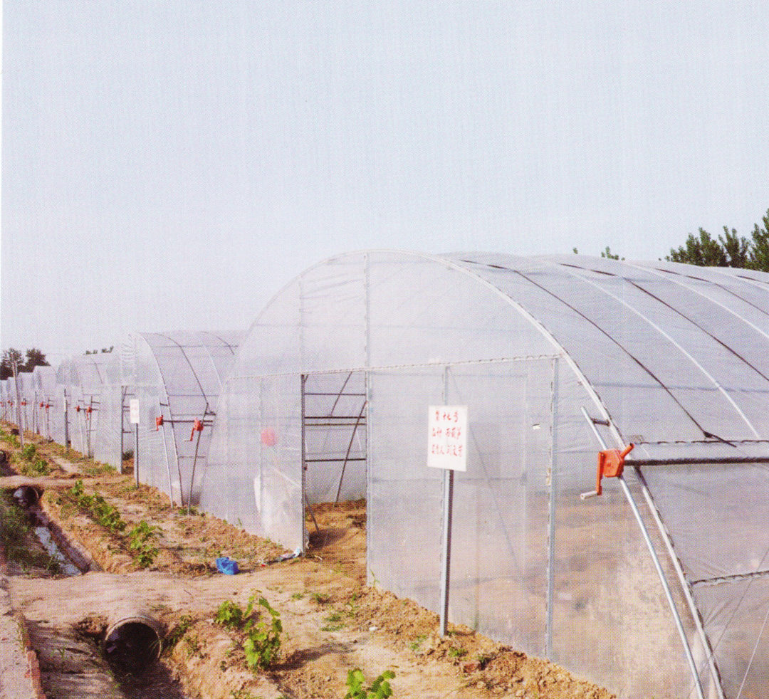 Film Greenhouse 01