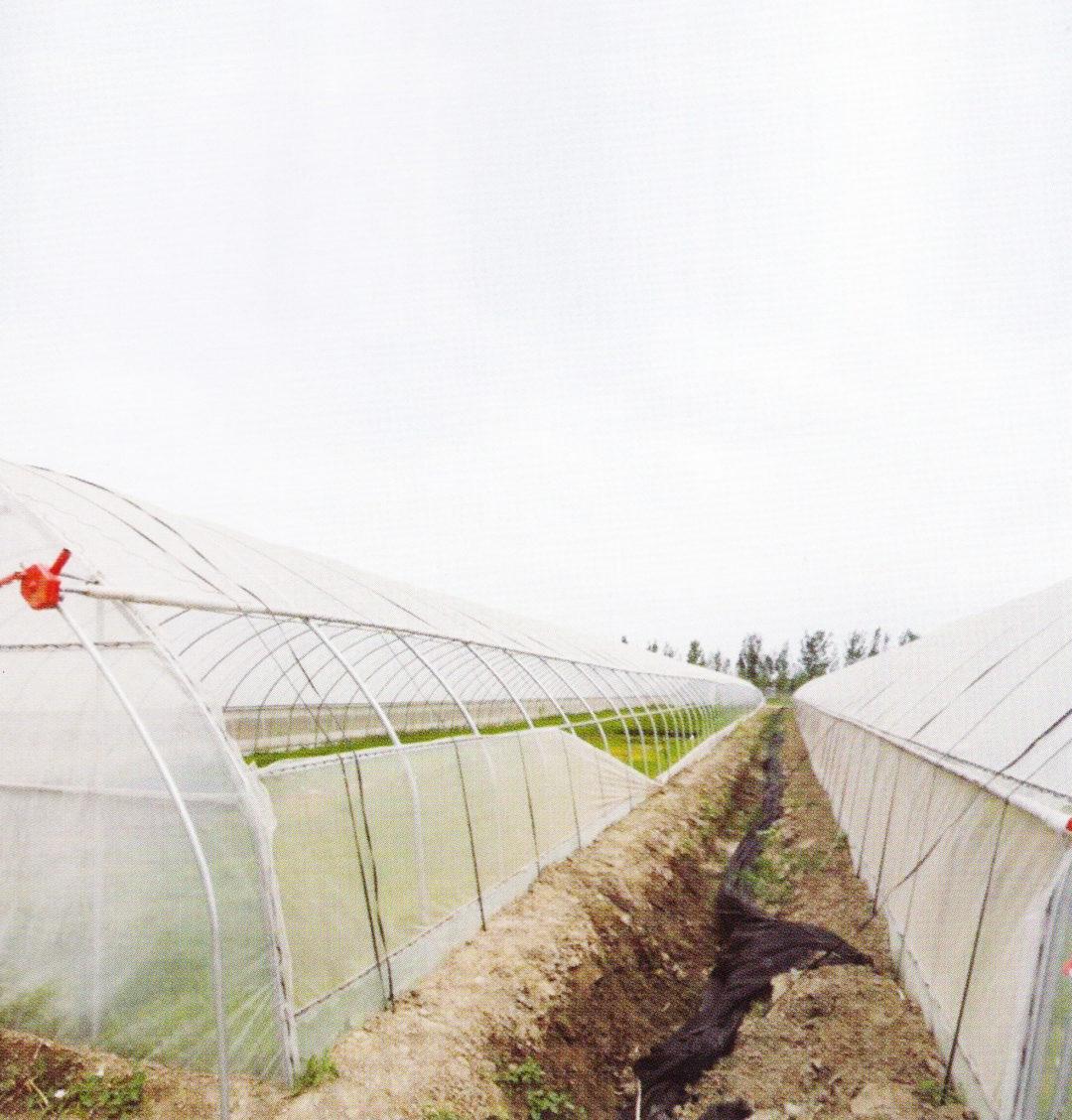 Film Greenhouse Drainage