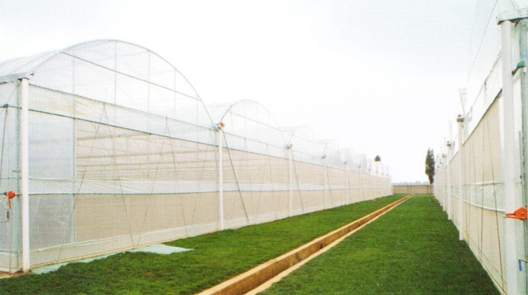 Film Greenhouse 03