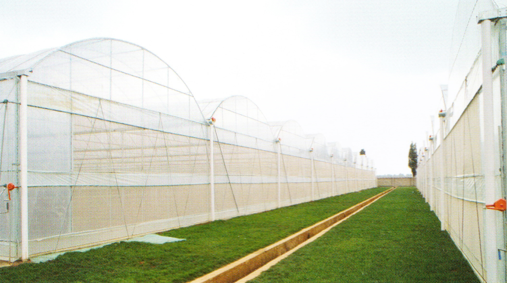 Film Greenhouse 03