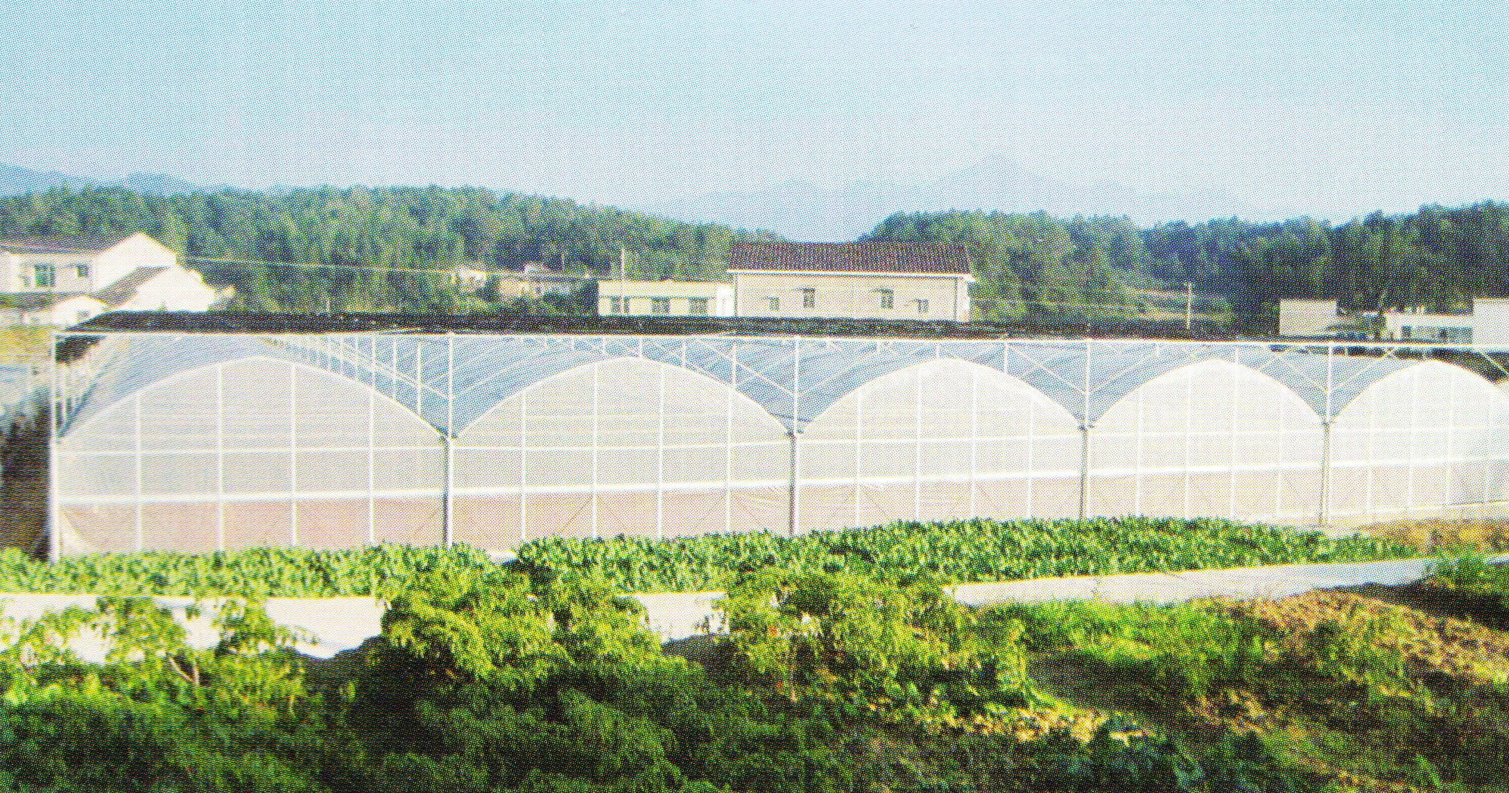 Film Greenhouse 04