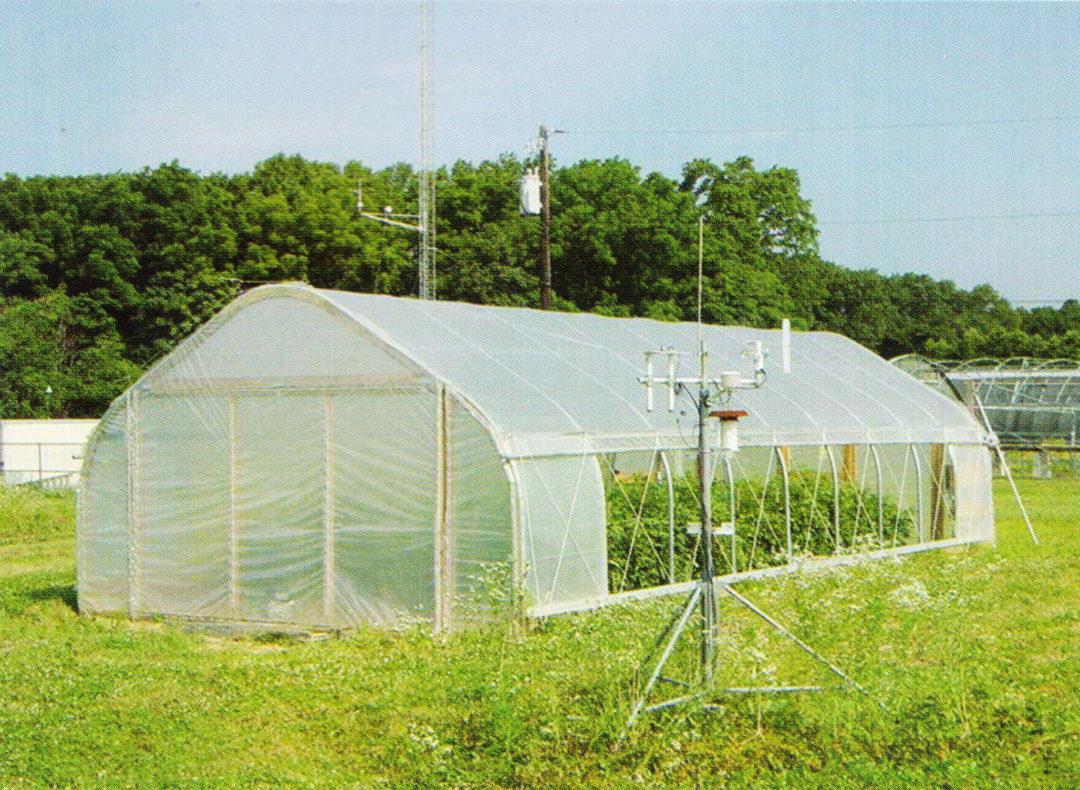 Film Greenhouse 05