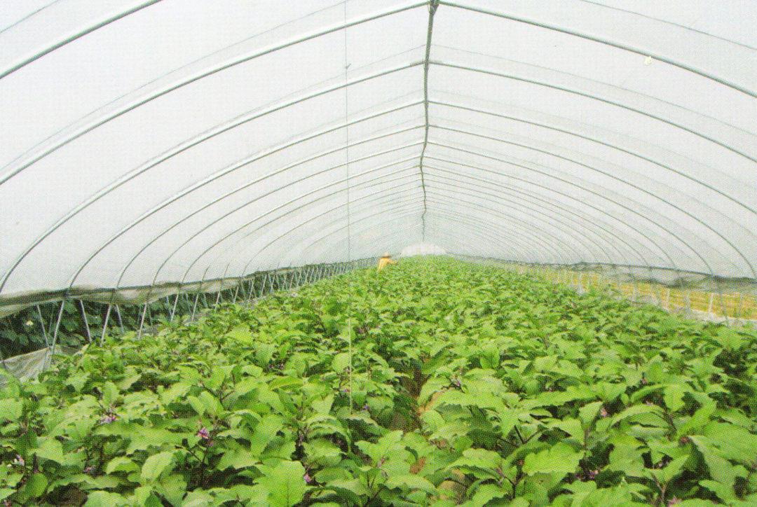 Film Greenhouse 06