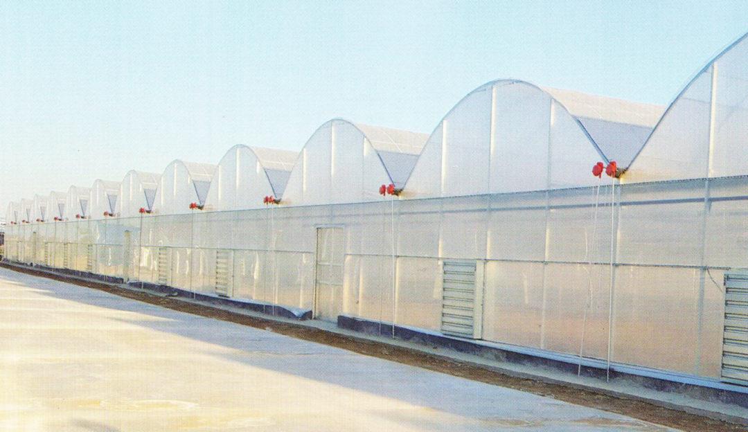 Film Greenhouse 07