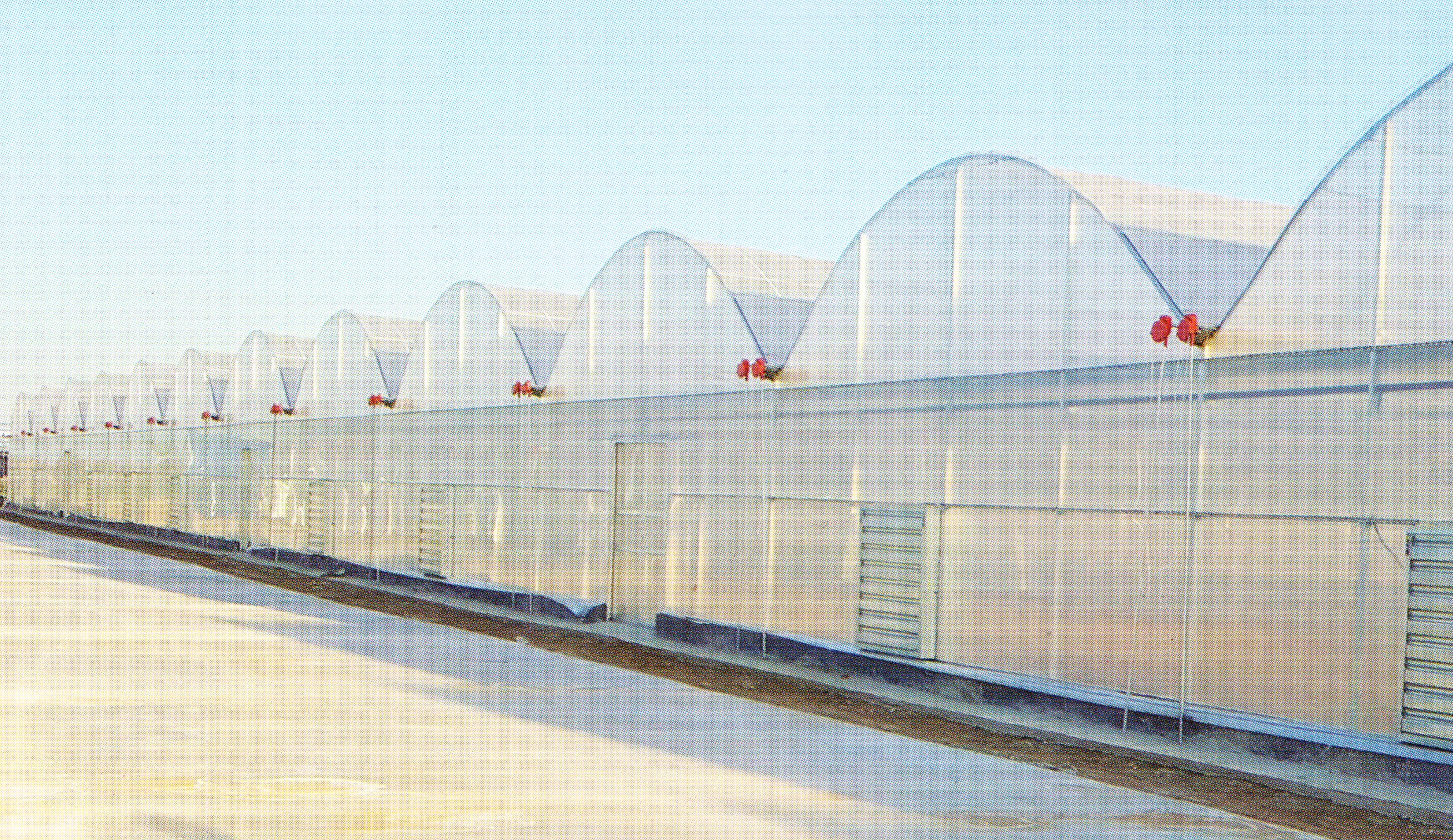Film Greenhouse 07