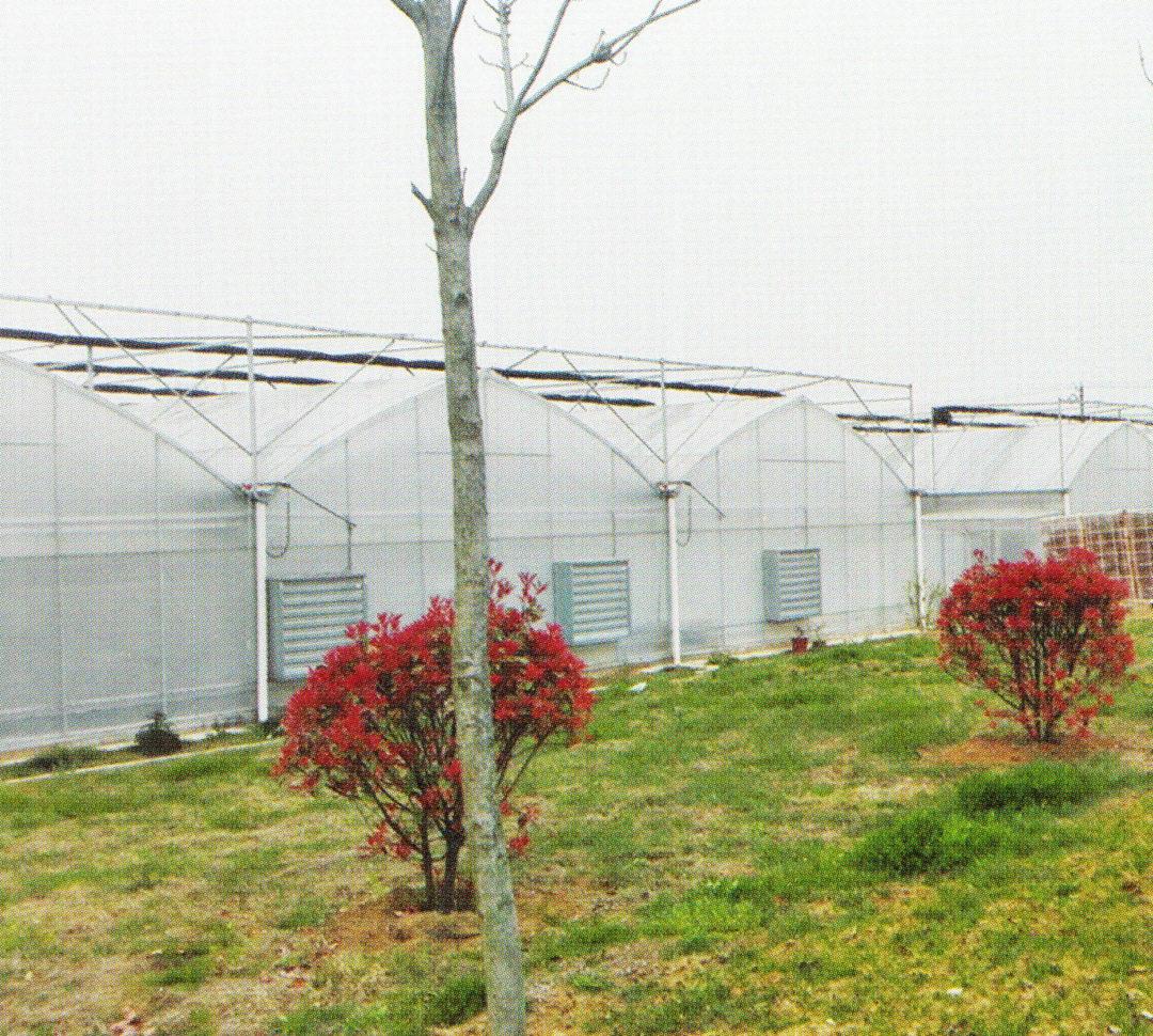 Film Greenhouse 08