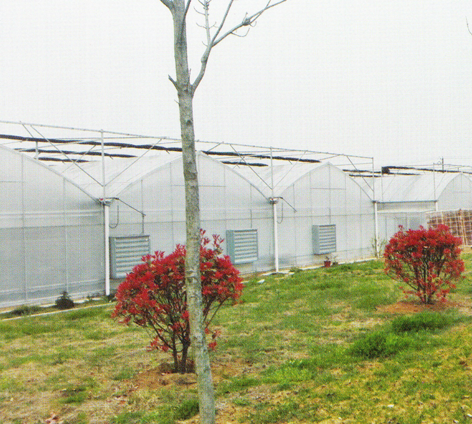 Film Greenhouse 08