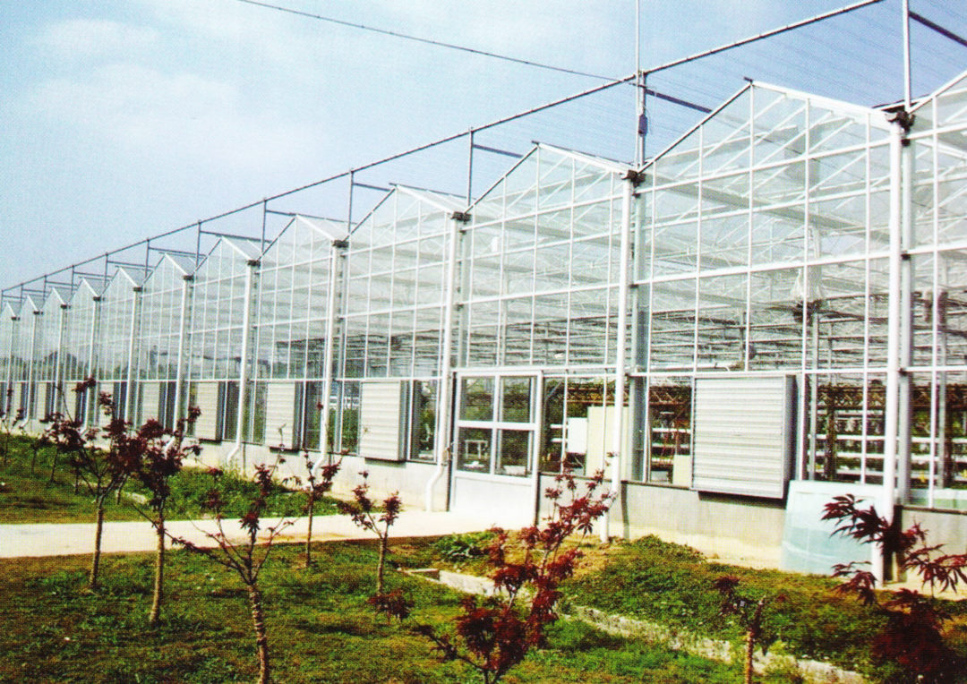 Multispan Greenhouse 2