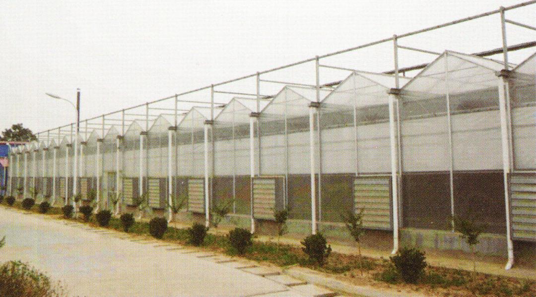 Sunlight Greenhouse 06